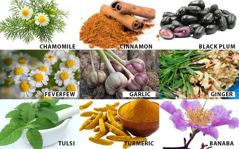 What are the different Medicinal Plant Names